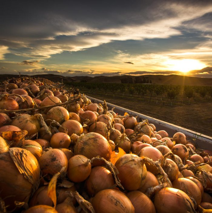 agricultural photography by hawkes bay photographer John Miles photography